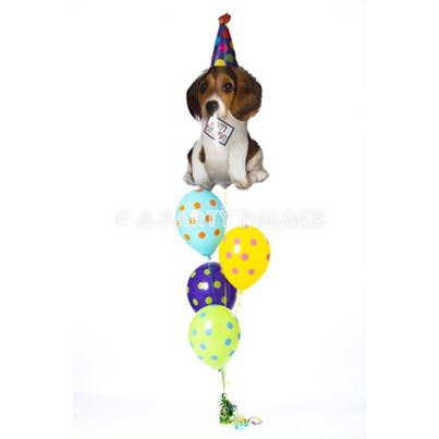Qualatex Doggy Birthday Blast!